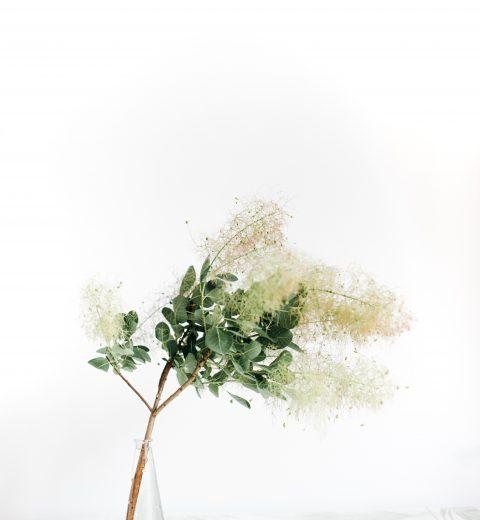 fleurs plantes doterra huiles essentielles